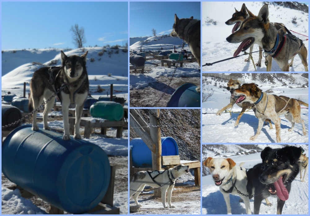 Adventures in Dogsleds - Dashing Through The Snow! - By Land And Sea